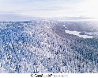 空中, 冬天, snow., 森林, 蓋, 看法