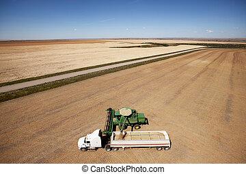 空中, 大草原, 收穫