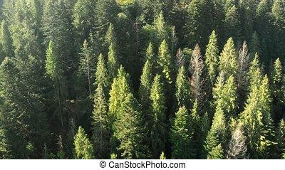 空中, 山, 高, 森林, 整洁漂亮, 樹, 烏克蘭人, 遠景