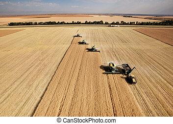 空中, 收穫, 看法