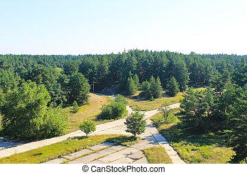 空中, 森林, 松樹, 看法