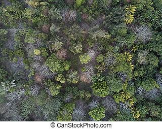 空中, 森林, 看法