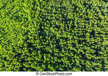 空中, 頂視圖, 綠色, 夏天, forest., 樹