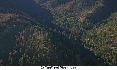 空中, 領域, 森林, 樹, 死, 射擊