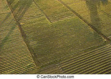 空中, crops.
