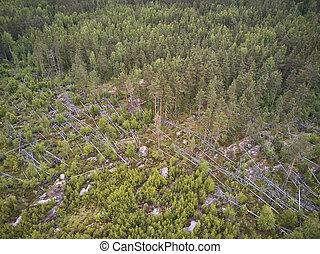 空中, karelia, 森林, 看法