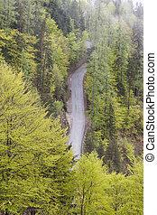 空中, route., 國家, 單個, 森林, 看法