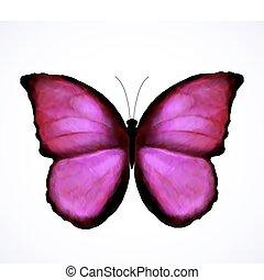 粉紅色, 蝴蝶, 明亮, 矢量, isolated.