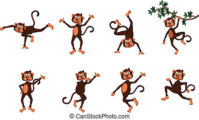 系列, 滑稽, 猴子, 漂亮