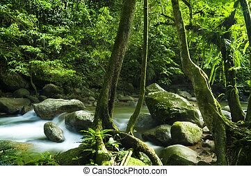 綠色的森林, 溪