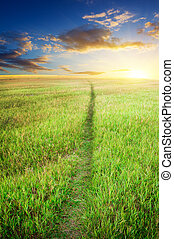 綠色的草地, 路
