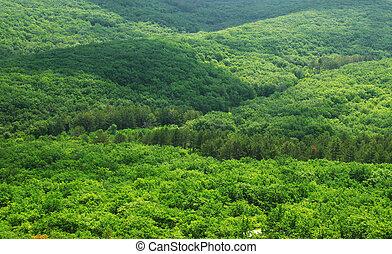 綠色, 空中, 森林, 看法