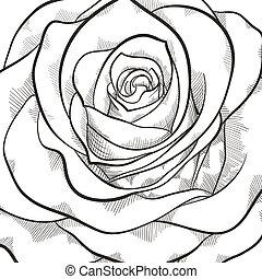 美麗, 上升, 白色, 黑色的背景