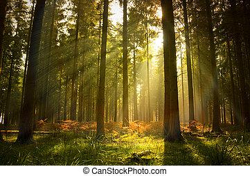 美麗, 森林