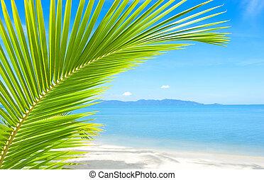 美麗, 樹, 熱帶, 沙子, 手掌海灘