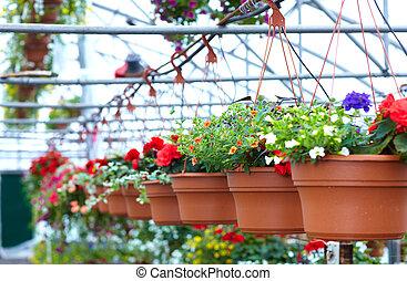 美麗, 花, 花, shop.