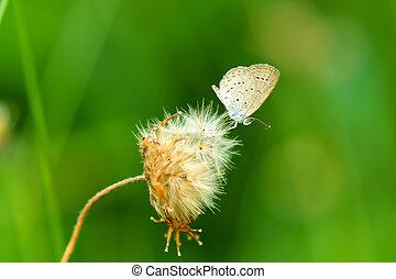美麗, 蝴蝶, grass., 花