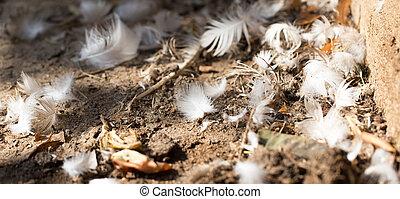 羽毛, 地面