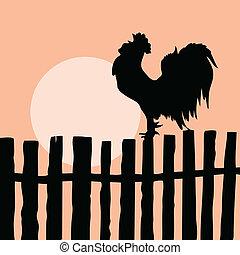 老, 公雞, 黑色半面畫像, 柵欄