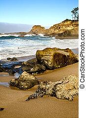 肖像, 俄勒岡州海岸