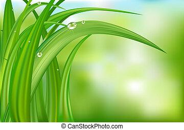 背景, 草, 綠色