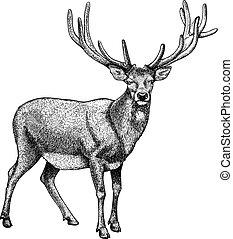 背, 雕刻, 白色, 馴鹿