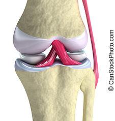 膝蓋, 觀點。, 人物面部影像逼真, 被隔离, 聯接