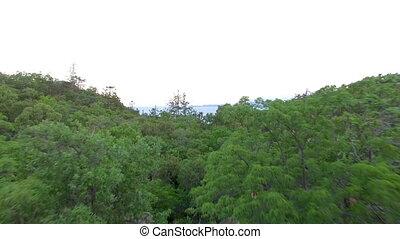 航空的射, 森林, 樹