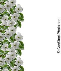 花卉疆界, 山茱萸, 花