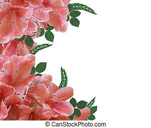 花卉疆界, 杜鵑花