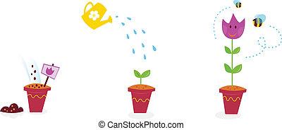 花, 成長, 階段, -, 郁金香, 花園