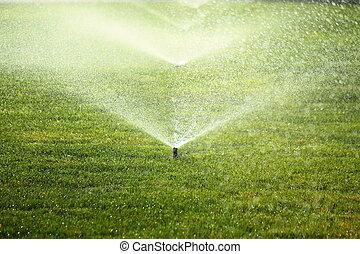 草坪, 綠色, 花園, 洒水器