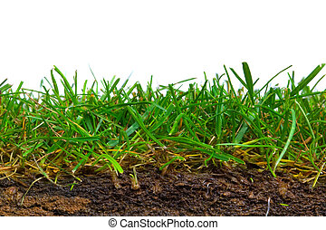 草皮, 部分, 產生雜種