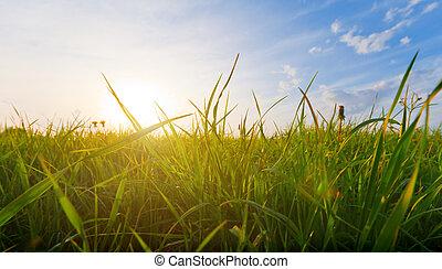 草, 傍晚