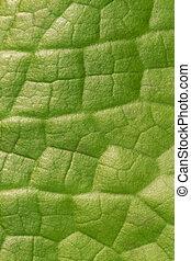 葉子, 垂直, 圖案, 摘要, 背景, 綠色