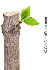 葉子, 干燥的枝條, 芽