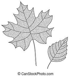 葉子, 彙整, 黑色半面畫像, 矢量, 稀薄, veins.