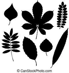 葉子, 被隔离, 彙整, 背景。, 黑色半面畫像, 矢量, 白色