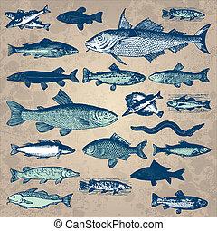 葡萄酒, fish, 集合, (vector)