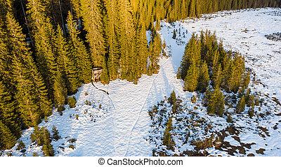 蓋, 看法, 森林, 冬天, snow., 空中, 草地