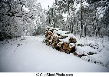 蓋, 邊, 報告, 路, 雪