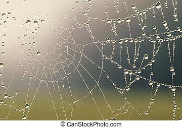 蓋, 露水, 蜘蛛网