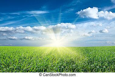 藍色, 太陽, 天空, 綠色的領域, 傍晚, 在下面, 新鮮, 草
