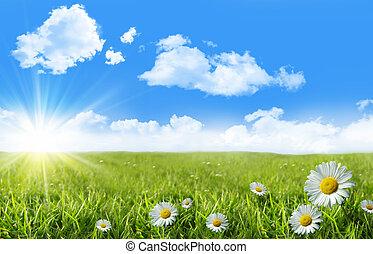 藍色, 野生的青草, 天空, 雛菊