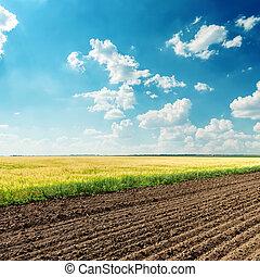 藍色, 領域, 天空, 深, 多雲, 在下面, 農業