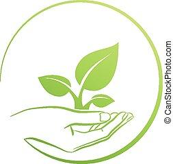 藏品, 植物, 標識語, 手, 概念