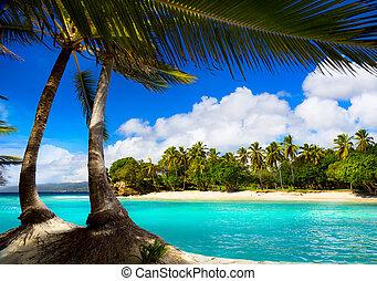 藝術, 熱帶, 加勒比海海, 瀕海湖