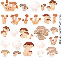 蘑菇, 設計, 你, 彙整