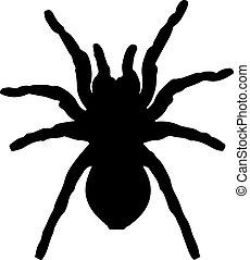 蜘蛛, 黑色半面畫像, 矢量, 黑色