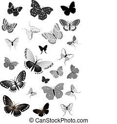 蝴蝶, 集合, 黑色